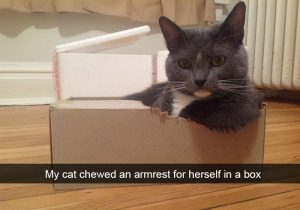 Hilarious cat snapchats