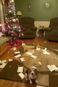 pets destroying Christmas