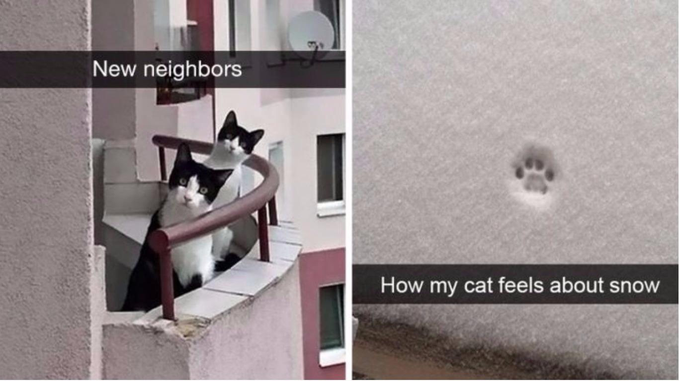 Hilarious cat snapchats
