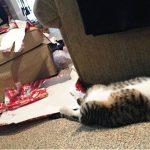 Pets destroying Christmas